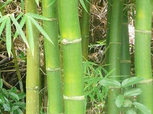 bambu-02