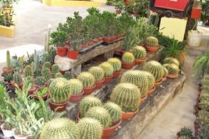 cactus-05