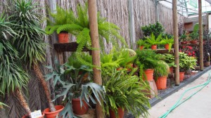 plantas 12