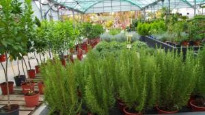 plantas 13