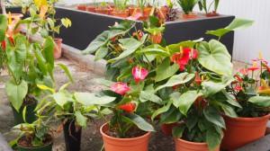 plantas 16