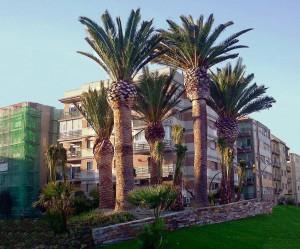 Phoenix Tarragona 2 800x600