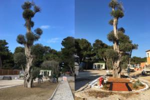 jardin2 InPixio