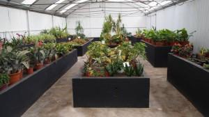 plantas 14